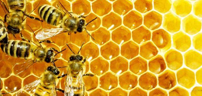 Трећи пчеларски сајам југоисточног Балкана у Врању