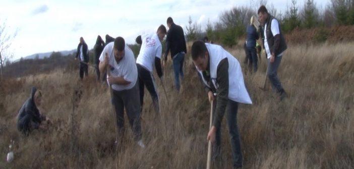 Чланови ГрО СНС у Врању засадили око 100 садница смрче на планини Гоч