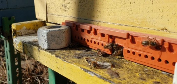 Изузетно лоша година за пчеларе – приноси меда мањи и до 80 одсто